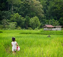Rice paddies in the mountains of Sabah by heidiwho