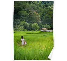 Rice paddies in the mountains of Sabah Poster