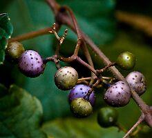 strange fruit by photobaum