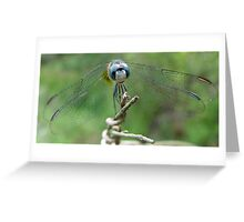 Blue Dasher Greeting Card