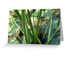 Swamp Spreadwing Greeting Card