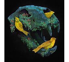 Three little birds Photographic Print