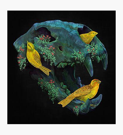 Three little birds Photographic Print
