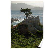 Lone Cypress--Monterey California Poster
