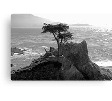 Lone Cypress--Monterey California  Canvas Print