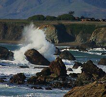 Sonoma Coastline by Barbara  Brown