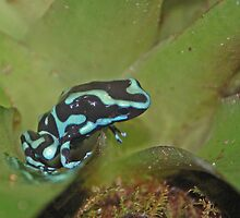 Dart Frog Green by mwfoster