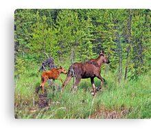 Quetico Moose Canvas Print