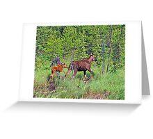 Quetico Moose Greeting Card