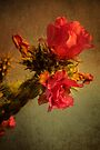Cholla Cactus Flower by Larry Costales