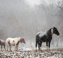 Horses Standing Quietly on a Hilltop in Light Snowfall by davidpurcell