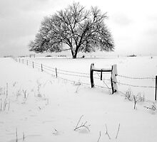 Lonely Tree and Pasture in Deep Snow by davidpurcell
