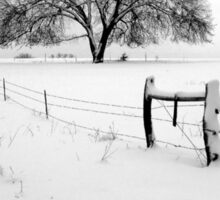 Lonely Tree and Pasture in Deep Snow Sticker