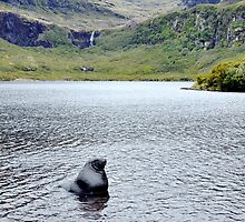 Bull in an idyllic lake by Phemie