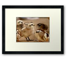 This Eyeliner is Great - Baby Chicks Framed Print