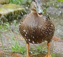 A Heavinly Shower -  Daffy Rescued Duck - NZ by AndreaEL