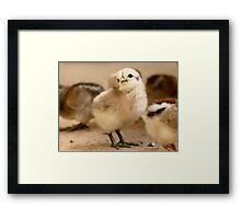 I'm Posing - Chick - NZ Framed Print