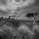 Wild Coast Storm by Hougaard Malan