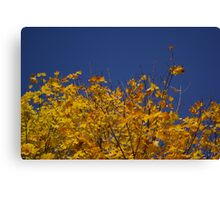 autumn leaves and blue sky Canvas Print