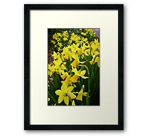 """A Host Of Golden Daffodils"" Framed Print"