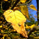 Autumn by Digby