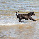 Water skier  by helmutk