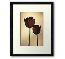 Queen of the Night Tulips Framed Print