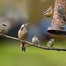 British Birds by JamieP