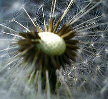 Seeds by Mojca Savicki