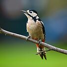 Greater Spotted Woodpecker by JamieP