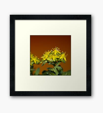 A Drop of Tear Framed Print