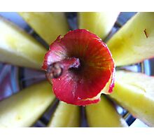 Apple Slices Photographic Print