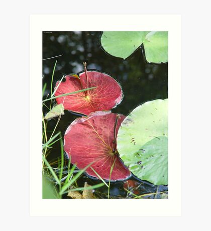 Waterlily Parasols Art Print