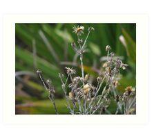Dried weeds  Art Print