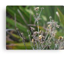 Dried weeds  Metal Print