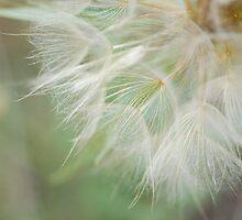 Dandelion by Sarah Miller