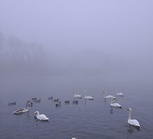 Swans in the Fog by Airwalkmax