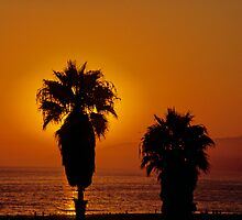 PalmBurst by BMGImage