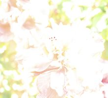 Floral romance. by elphonline