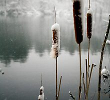 Cold Cat Tails by Jerry  Mumma