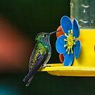 Hummingbird of Iguazu by photograham