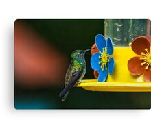 Hummingbird of Iguazu Canvas Print