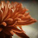 tangerine dream by Angel Warda