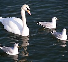 Swans Secret Service by madmac57