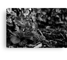 Flowers in the Soil Canvas Print