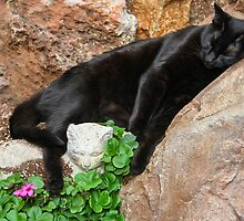 Suki On the Rocks! by heatherfriedman