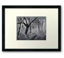 Monochrome Path 1 Framed Print
