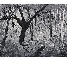 Monochrome Path 1 Photographic Print