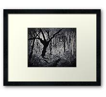 Monochrome Path 2 Framed Print