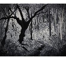 Monochrome Path 2 Photographic Print